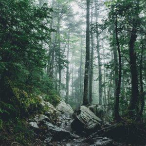 Franconia Notch, White Mountains, New Hampshire, USA